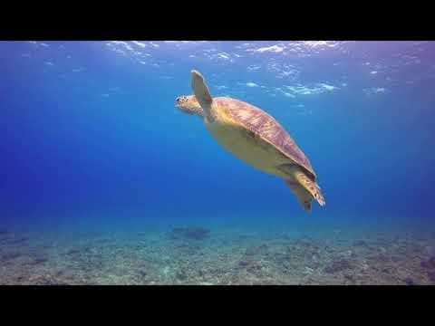 """""""Ocean"""" - Ambient Worship"""