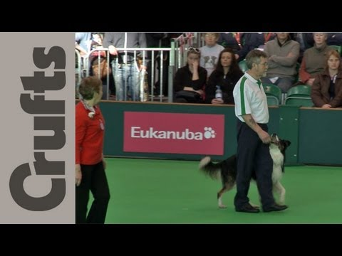 World Cup Obedience Part 2 - Crufts 2012
