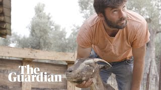 'My animals burned alive' in Greece's wildfires
