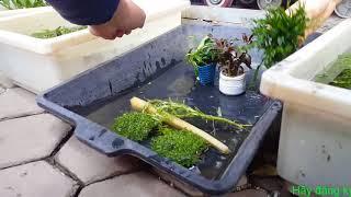 Đi chợ Bưởi mua cây thủy sinh