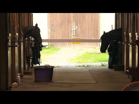 I-felt-violated-Stable-owner-in-Norfolk-says-horse-was-assaulted-by-man