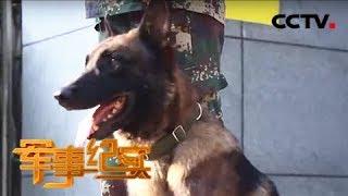 本期节目主要内容: 为了完成新训练大纲的试训任务,一老一少两条军犬在...