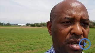 Former pyrethrum farmer in Nakuru urges farmers to go back to farming