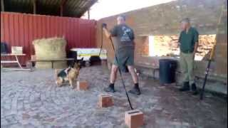 Zanmarheim K9 And Security Explosives And Narcotics
