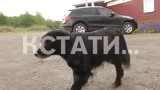 Догхантеры начали отстреливать собак из машины прямо в городе