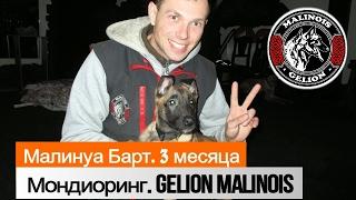 Малинуа Барт. 3 месяца. послушание