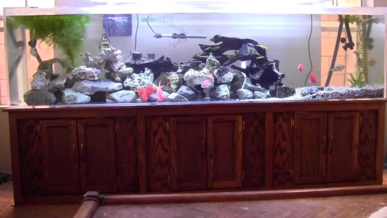 240 gallon acrylic fish tank aquarium youtube for Acrylic vs glass fish tank