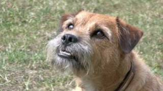 You And Your Border Terrier: The Essential Guide; The Head