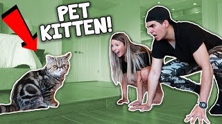 One of Chris And Kris's most viewed videos: Training Our Pet Kitten! (Hilarious Fail)