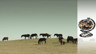 The Last Wild Horses of America's Great Plains (2003)
