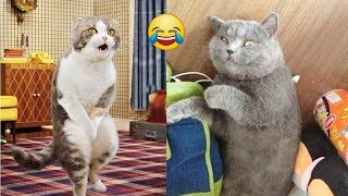 TOP Cute Kittens and Funny Cats Playing Dancing for laugh-Ultra FUNNY CAT videos Compilation#95❤️