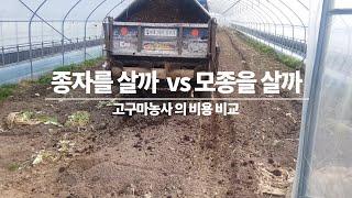 고구마 농사비용 비교/ 모종을 길러서  vs 모종을사서…