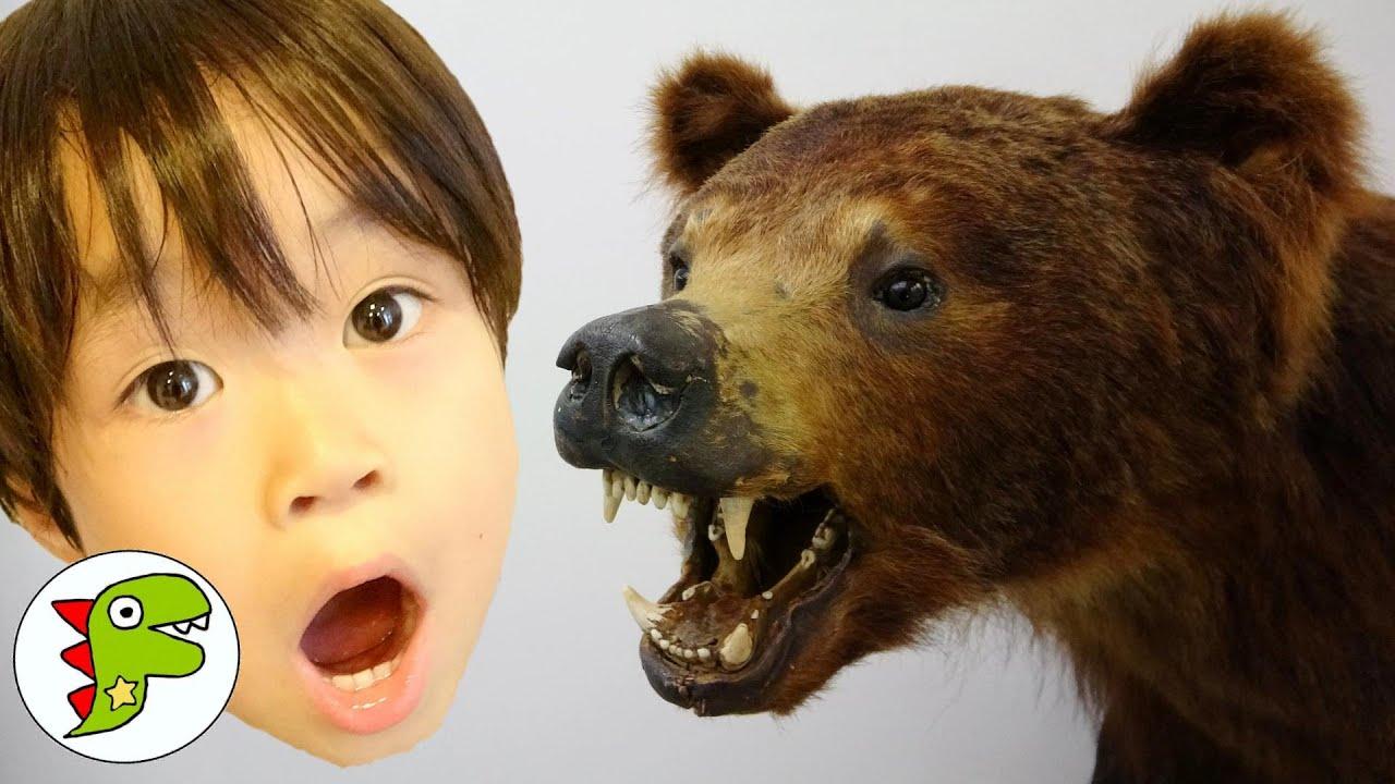 おでかけ 北海道 のぼりべつクマ牧場でクマさんにエサをあげたよ! トイキッズ