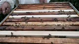 Как я развёл пчёл!Первый раз!Моя пасека!Пчеловодство для начинающих!Пчеловодство в России!