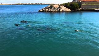 Louie swimming with Dolphins