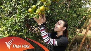 เก๋ายกก๊วน : ลุยสวนส้ม ชมเกษตรผสมผสาน (7 มิ.ย. 60)