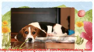 Easy To Follow Dog Traning Method - Crate Training Adult Dog