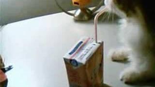 Drink milk myself