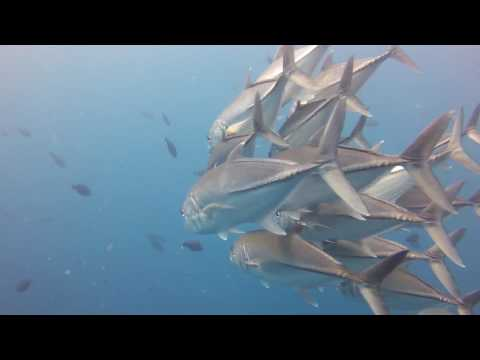 Dixon's Pinnacle | Scuba Diving in Havelock | Dive India