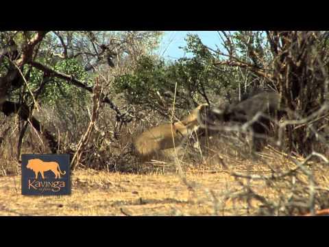 Professional Guide Andrew Smith Kavinga Safaris, Mana Pools, Zimbabwe