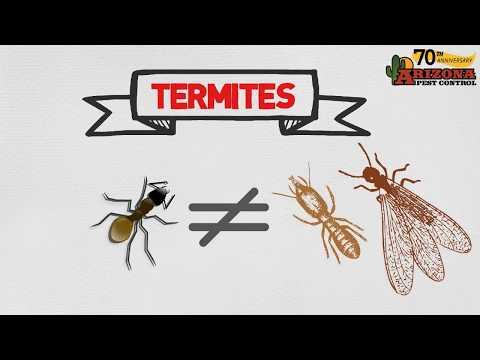 Tucson Termite Control | Arizona Pest Control