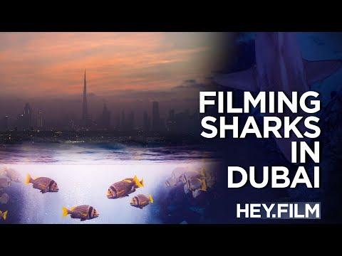 Filming Sharks in Dubai | Hey.film podcast ep51