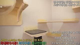 일산 카페 캣룸  플레이캣 프리미엄 고양이 투명 놀이터…