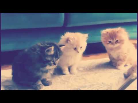 Cute Cats And Kittens | Cutest Cats Compilation 2018 | Best Cute Cat Videos Ever | Part - 3 | TFV360