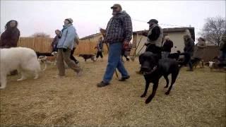 Big Dog Socialization Class - 02/28/2015 - Utah Dog Trainer
