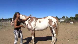 How to: Mount a Horse Bareback
