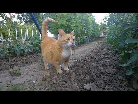 Relaxing Cat Video 3
