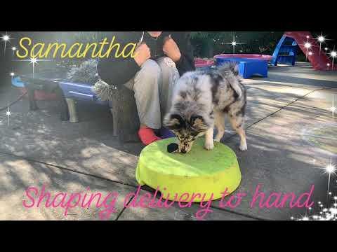 Puppy Training Dog Training