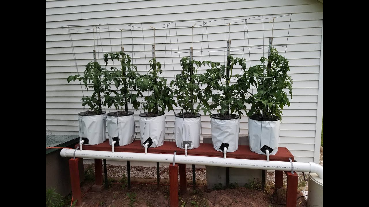 Hydroponics Easy Self Sustaining Beginners Diy Tomato Drip System Part 2