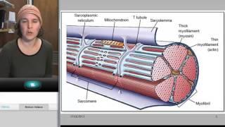 Popular Classic (Sp13)- Skeletal Muscles: Skeletal Muscle Contraction