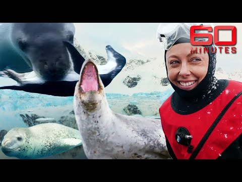 Risky encounter with Antarctica's notorious predator: Leopard Seal | 60 Minutes Australia