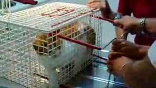 Gato al veterinario (una fiera!!!!)