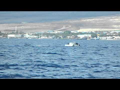 Whale Watch in Maui, Hawaii