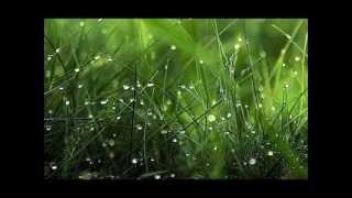 Diamonds of Dew by The Phoenix Singers