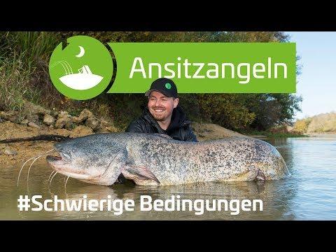 Temperatursturz - Welsansitz im Herbst | www.zeck-fishing.com