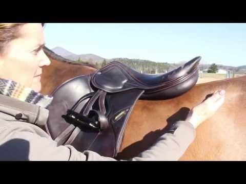 Robin Moore & Amerigo Saddle Fitting Tips