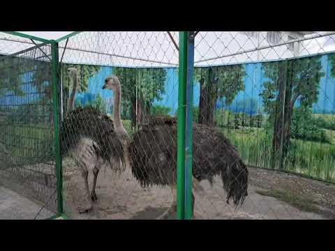 Баткен: Зоопарк