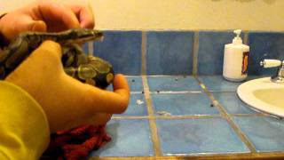 Removing Snake Skin With Hot Washcloth