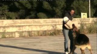 Sport & Dog Addestramento Cinofilo Mpeg-2-dvd.mpg
