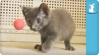 PADDLE BALL HYPNOSIS FOR KITTIES! - Kitten Love