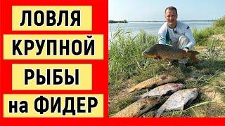 Ловля крупной рыбы на фидер. Рыбалка на Амуре.