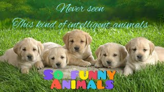 So funny videos of Dogs and cats ||Cute animals