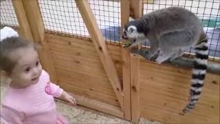 ➤VLOG Кид Кэт – Зверюшки Контактный зоопарк (ТЦ Ривьера) канал Катя из Москвы Kid Kat ТV Москва
