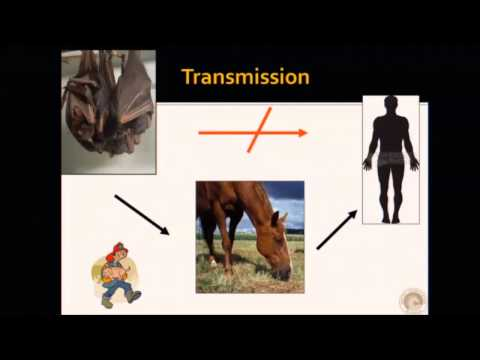 The Rescue Scene- Veterinarians Viewpoint