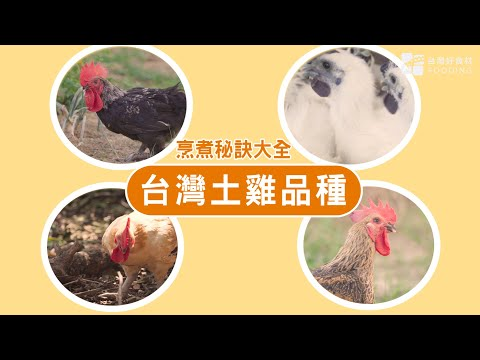 【餐桌上的肉蛋魚】常見的台灣土雞品種有哪些?土雞肉怎麼煮才好吃?