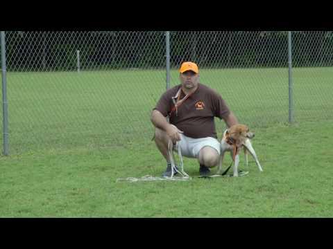 Whistle Break Dogs Training